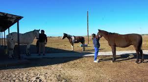 cavalls4